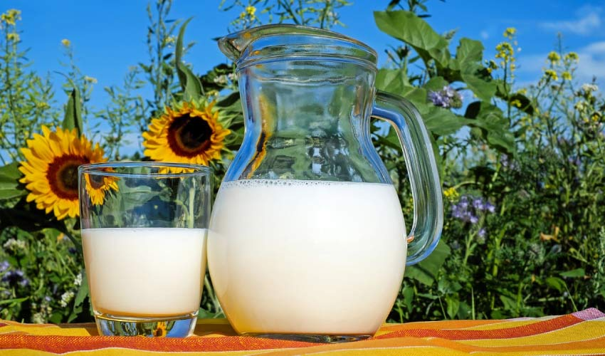 pitcher and glass of milk in a sunflower field ready to build strong and healthy teeth